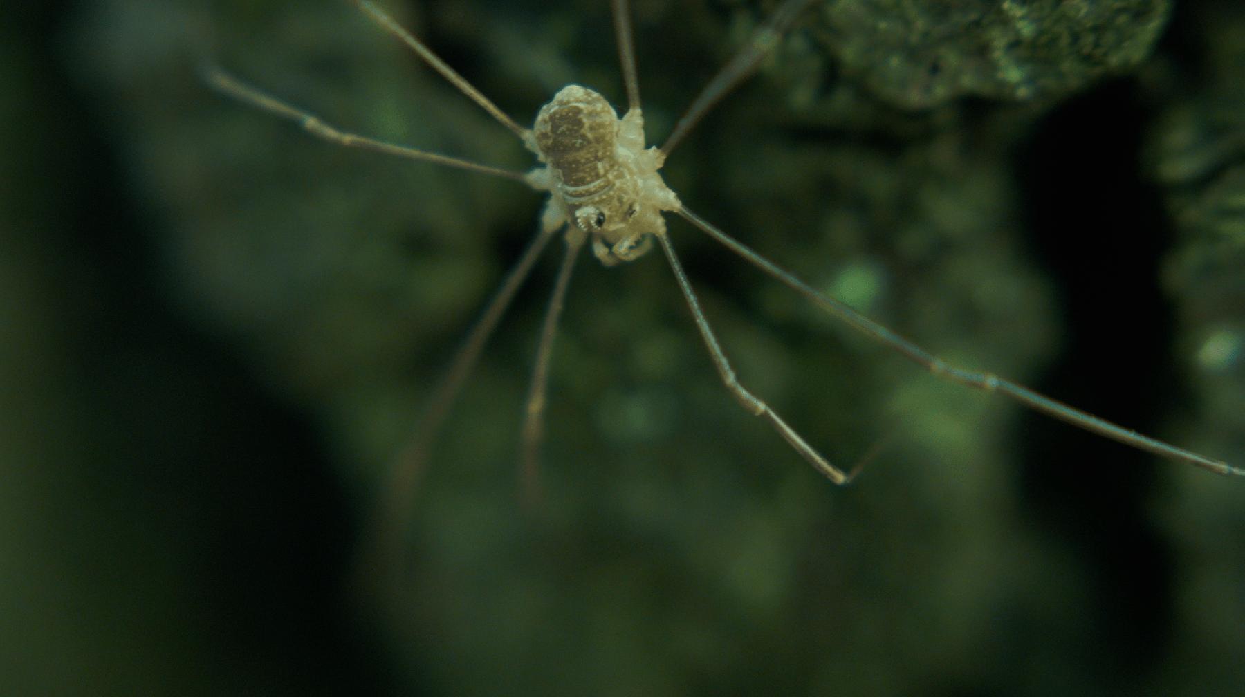 araignée en gros plan, bague macro