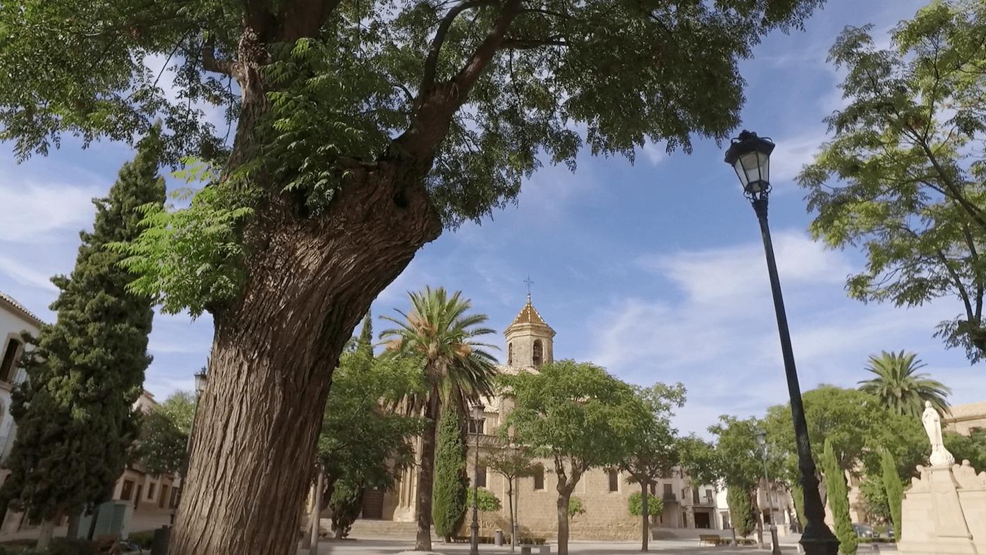 place palmier soleil chaleur pavet espagneeglise